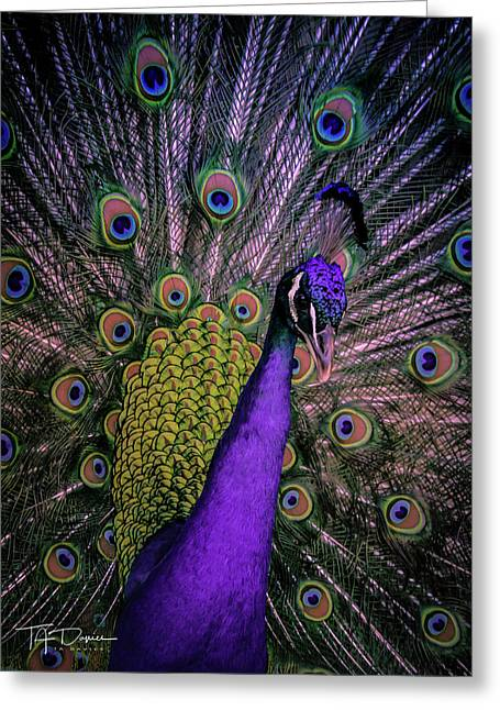 Peacock In Purple Greeting Card