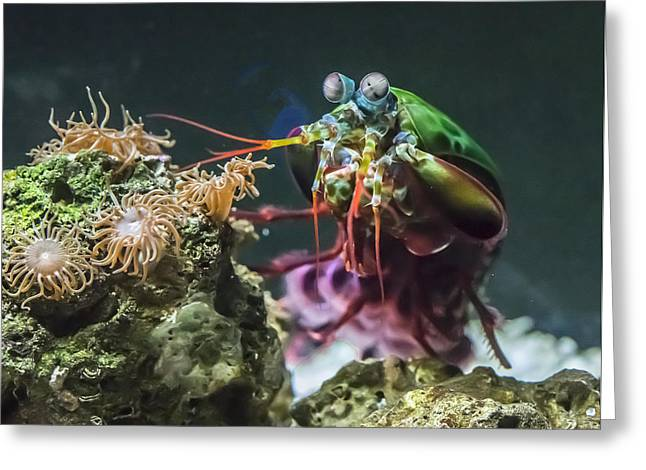 Peacock Mantis Shrimp Profile Greeting Card