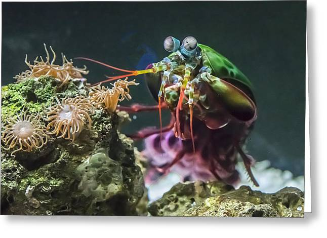 Peacock Mantis Shrimp Profile Greeting Card