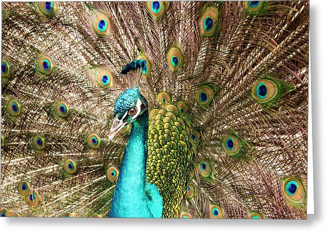 Peacock Portrait Greeting Card by Jean Noren