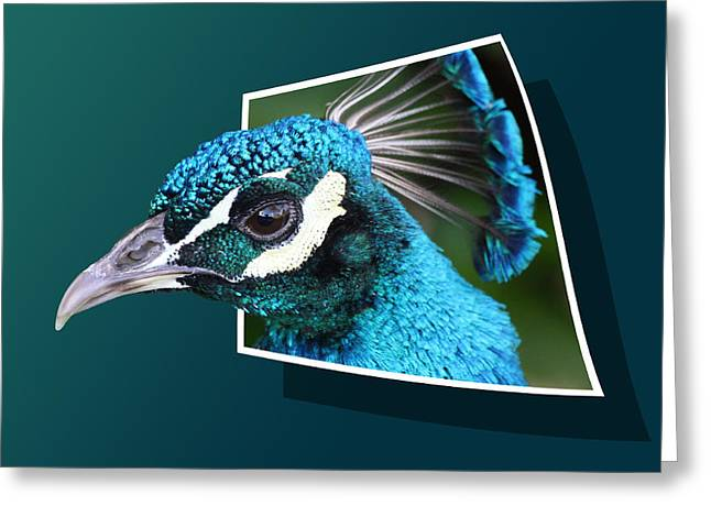 Peacock Greeting Card by Shane Bechler
