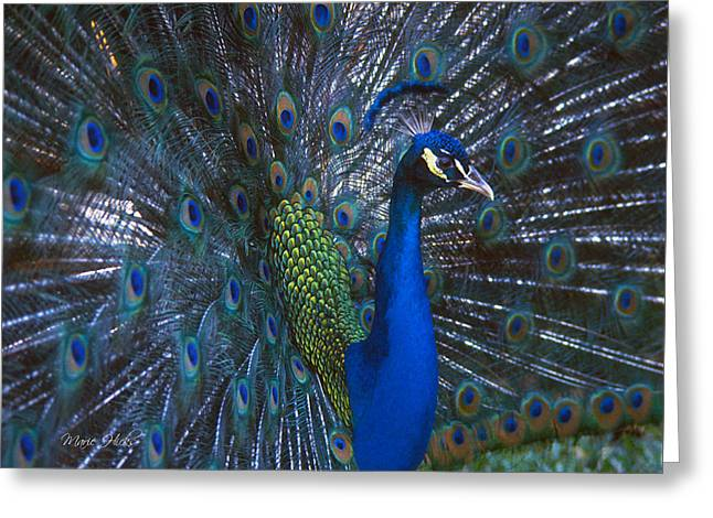 Greeting Card featuring the photograph Peacock Splendor by Marie Hicks