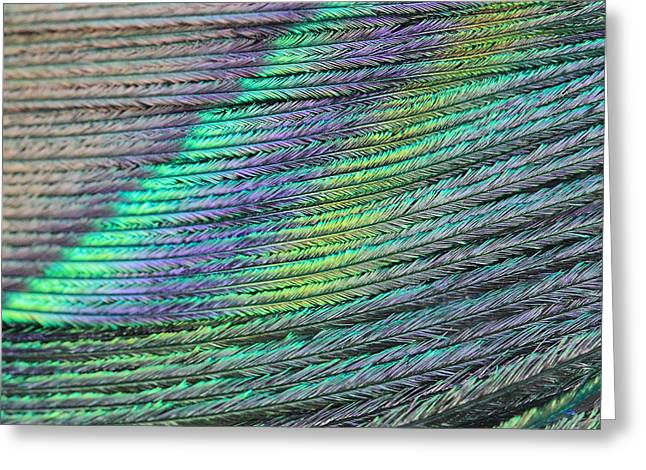 Peacock Stripes Greeting Card