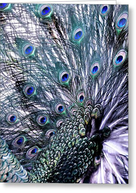 Peacock's Feathers Greeting Card by Joachim G Pinkawa