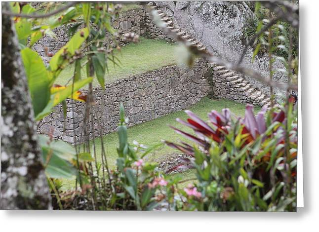 Peeking In At Machu Picchu Greeting Card