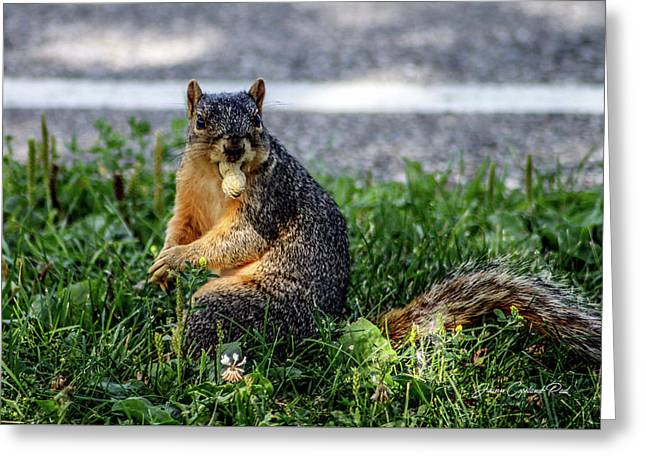 Greeting Card featuring the photograph Peanut by Joann Copeland-Paul