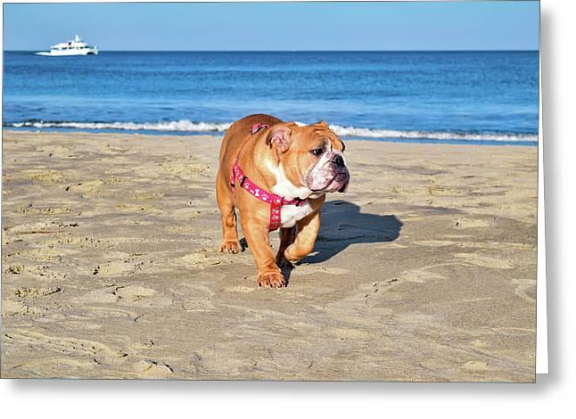 Peanut On The Beach Greeting Card