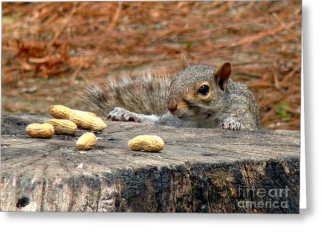 Greeting Card featuring the photograph Peanut Surprise by Sue Melvin