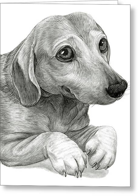 Peanut The Dachshund Greeting Card by Cara Bevan