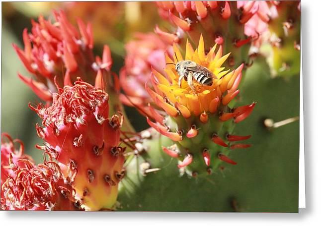 Pear Bee Greeting Card