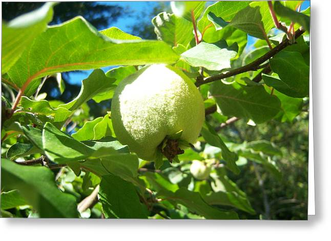 Pear Greeting Card by Ken Day