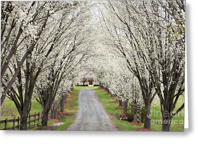 Greeting Card featuring the photograph Pear Tree Lane by Benanne Stiens