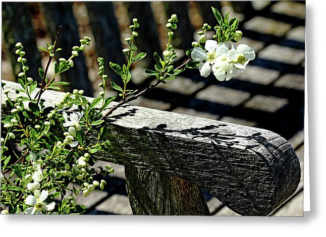 Pearls Petals And Shadows Greeting Card by Debbie Oppermann