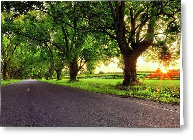 Greeting Card featuring the photograph Pecan Alley Sunrise - Scott Arkansas - Landscape by Jason Politte
