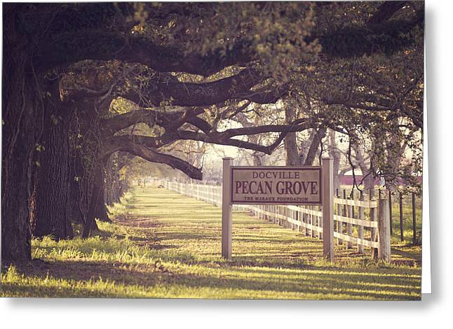 Pecan Grove  Greeting Card by Alicia Morales