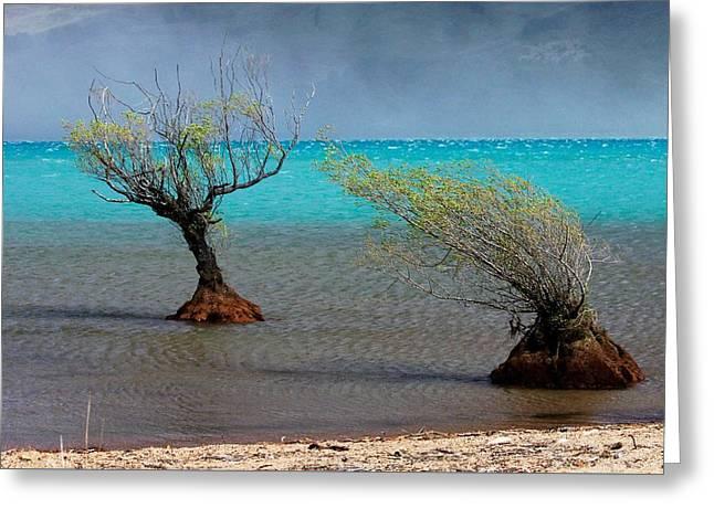 Peculiar Trees Greeting Card