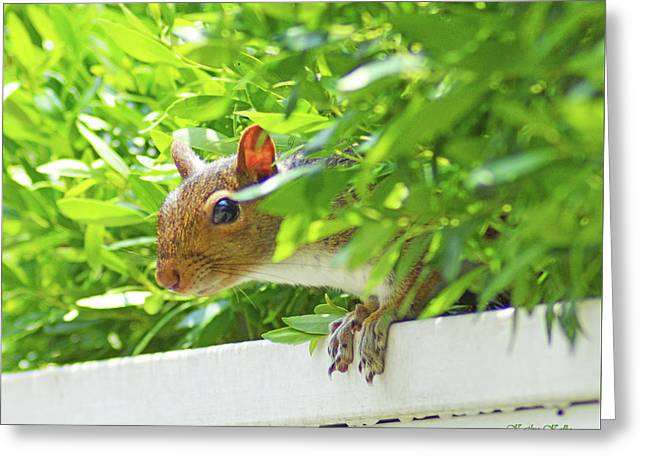 Peek-a-boo Gray Squirrel Greeting Card