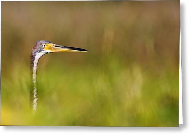 Peek-a-boo Birdie Greeting Card