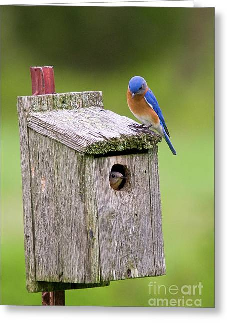 Peek A Boo Blue Greeting Card