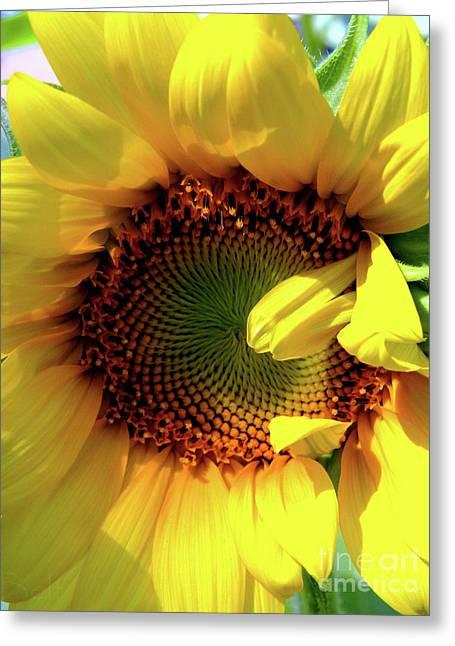 Peek-a-boo Greeting Card by Christine Belt