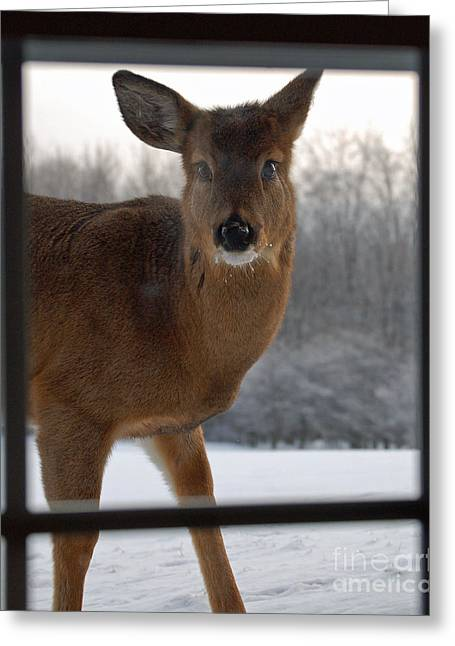 Peek A Boo Greeting Card by Diane E Berry