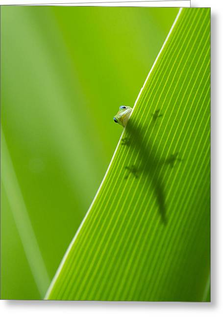 Peek A Boo Gecko Greeting Card