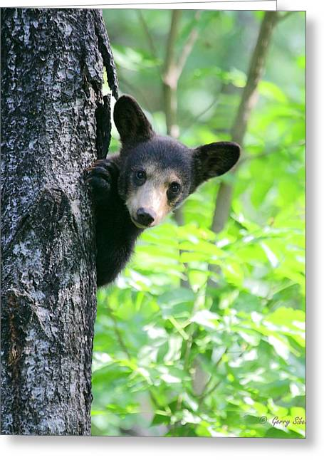 Greeting Card featuring the photograph Peek-a-boo by Gerry Sibell