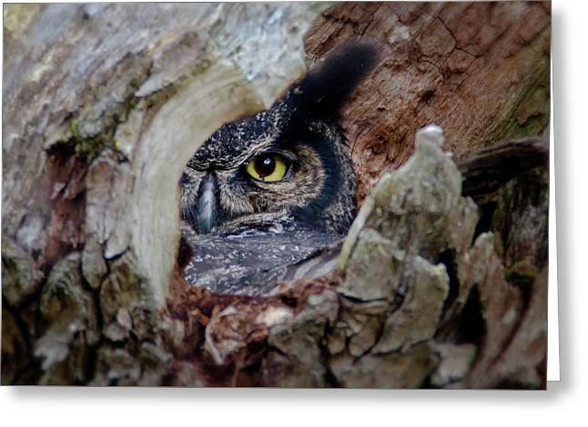 Peek A Boo Owl Greeting Card