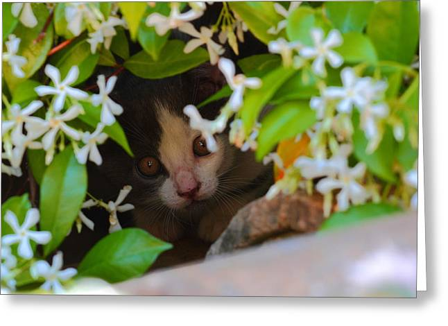Greeting Card featuring the photograph Peek-a-boo by Richard Patmore