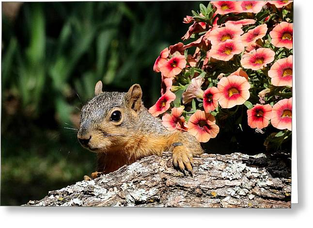 Peek-a-boo Squirrel Greeting Card
