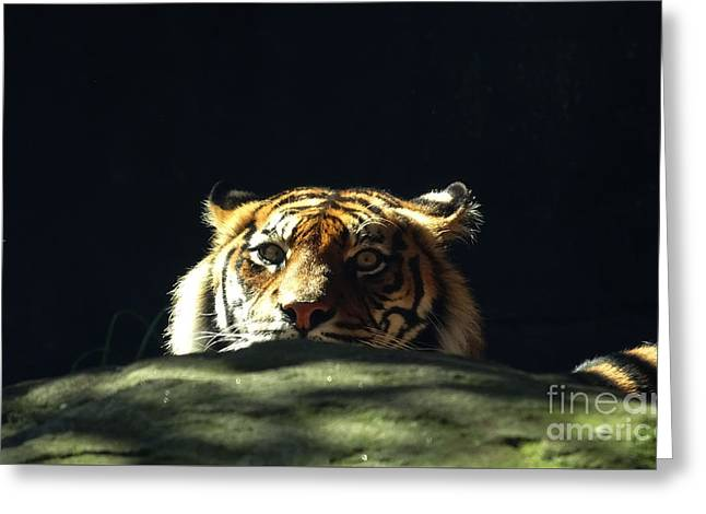 Greeting Card featuring the photograph Peek-a-boo Tiger by Angela DeFrias