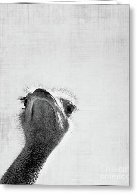 Peekaboo Ostrich Greeting Card
