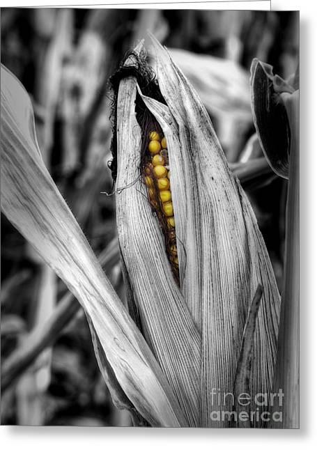 Peeking Corn Greeting Card