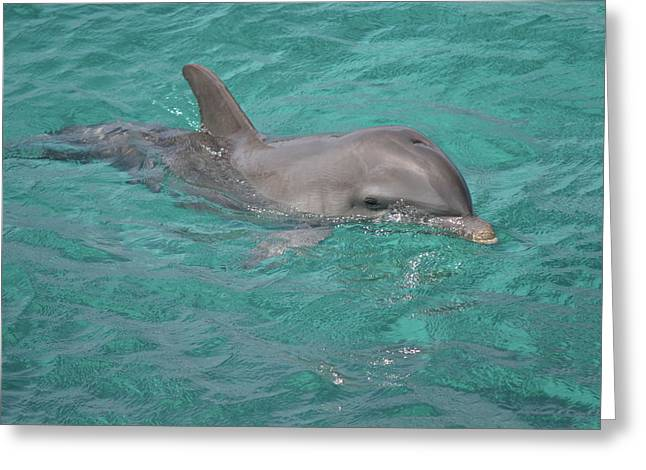 Peeking Dolphin Greeting Card
