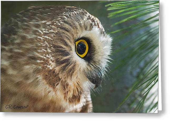 Peeking Out Greeting Card by CR  Courson