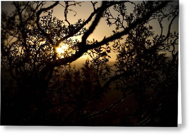 Peeking Sun Greeting Card by Mike Hill