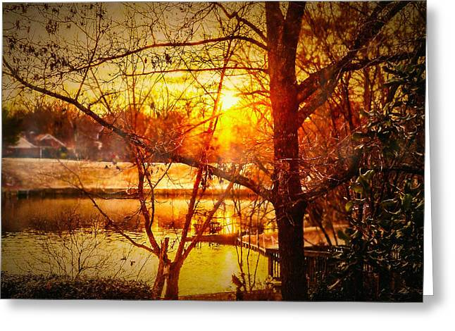 Peeking Through - Lake Sunrise Greeting Card by Barry Jones