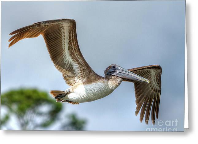 Pelican-4443 Greeting Card