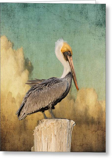Pelican And Clouds Greeting Card