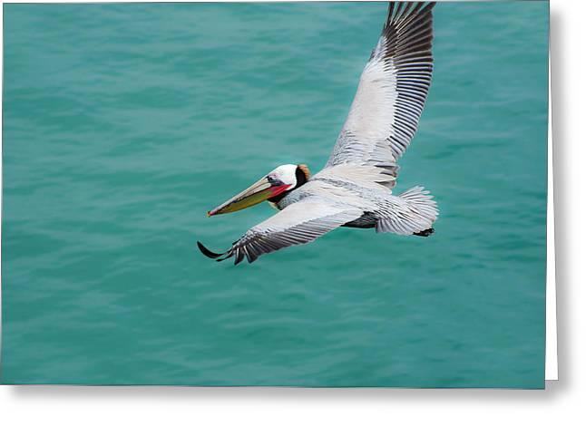 Pelican Beautiful Greeting Card