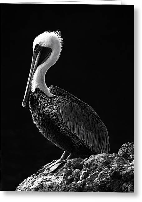 Pelican Black And White Greeting Card by Mark Kiver