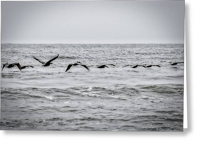 Pelican Black And White Greeting Card