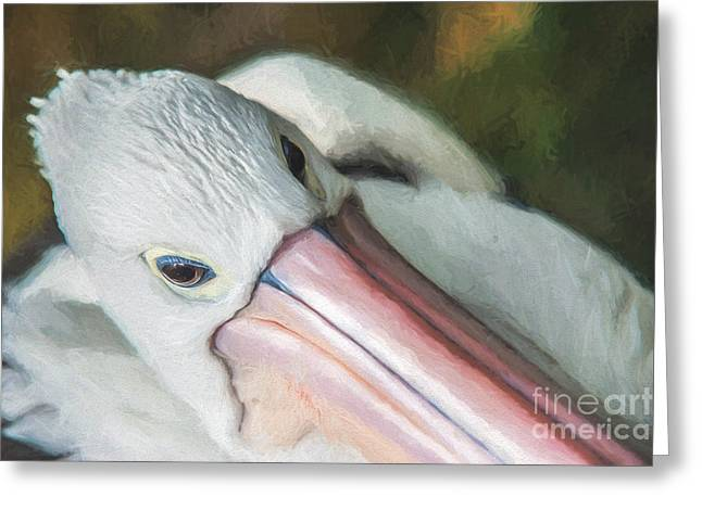 Pelican Brief   Go6 Greeting Card