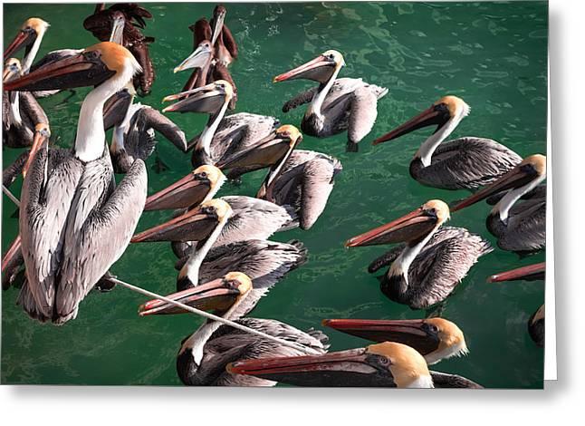 Pelican Choir Rehearsal Greeting Card by Karen Wiles