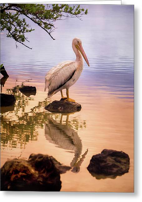 Pelican Connection 2 Greeting Card