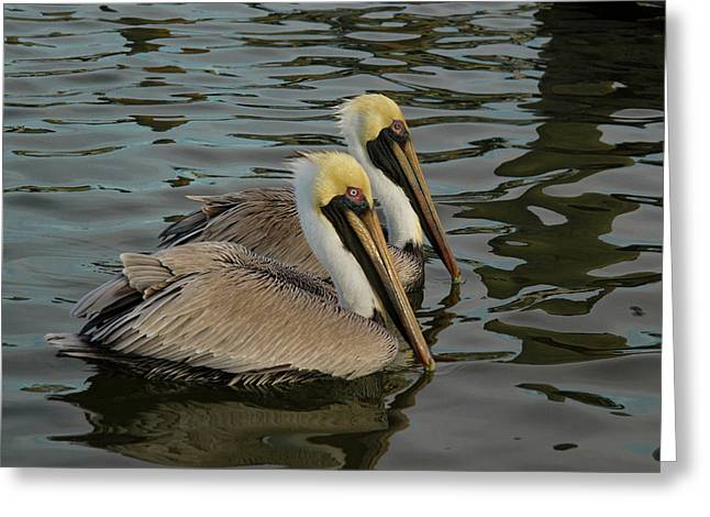 Greeting Card featuring the photograph Pelican Duo by Jean Noren