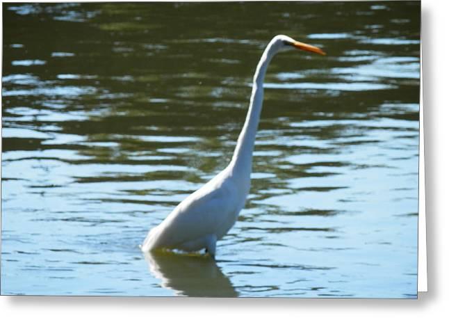 Pelican Emerging Greeting Card
