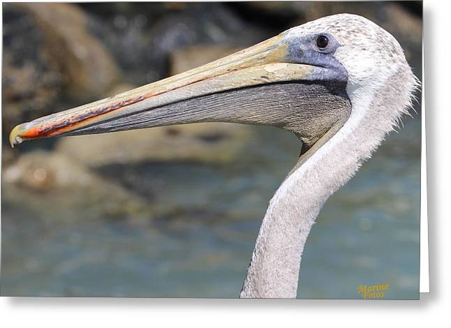 Pelican Face  That Only A Mother Could Love Greeting Card