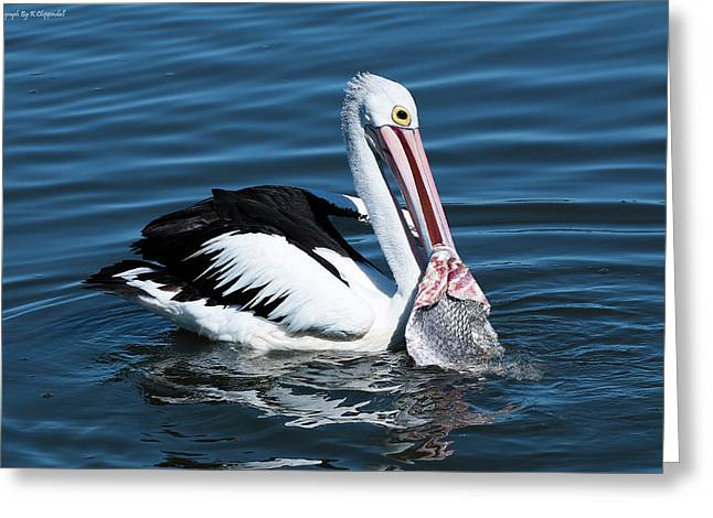 Pelican Fishing 6661 Greeting Card by Kevin Chippindall