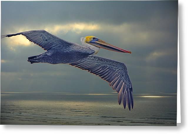 Pelican Flight Greeting Card